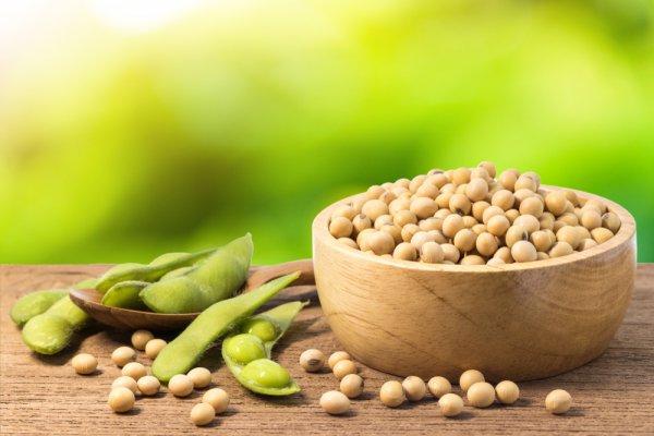 Khasiat Dari Kacang Kedelai Untuk Kesehatan