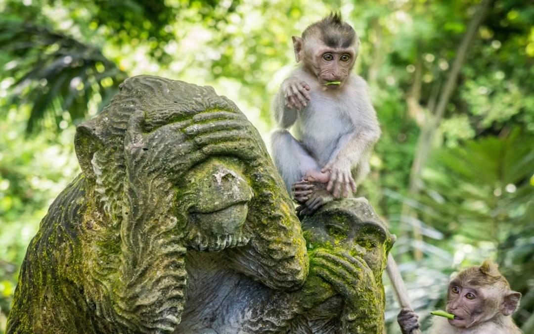 Monkey Forest Terletak Pada Ubud